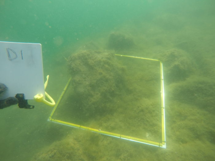Seabed survey by deep bight marine, port lincoln